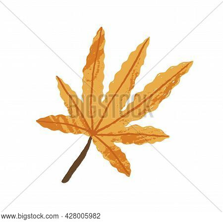 Yellow Maple Leaf. Autumn Leaves For Decoration. Decorative Fall Foliage Plant. Autumnal Design Elem