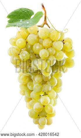 Bunch of yellow grapes in water drops with a grape leaf isolated on a white background.