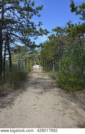 Sand Hiking Trail Through Pine Trees And Scrub Trees.