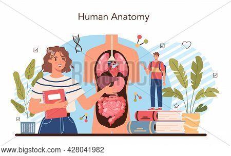 Anatomy School Subject. Internal Human Organ Studying. Anatomy