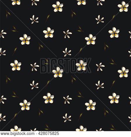 Tropical Frangipani Plumeria Flower Seamless Vector Pattern On A Black Background. Exotic Summer Nat