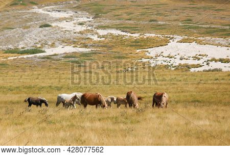 Group Of Horses In The Wild Grazing And Grazing The Grass Undisturbed In The Boundless Prairie In Su