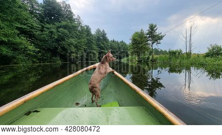 Small Ginger Dog Standing On Kayak Feeling So Happiness And Fun. Adorable Dog Enjoy And Fun Spend Ti