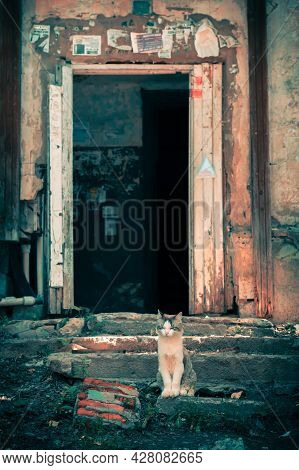 Homeless Lonely Cat Sits On The Steps Of The Stairs On The Porch Of An Old, Scary Abandoned House At