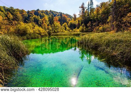 Plitvice Lakes are beautiful karst lakes. The transparent shallow lake reflects the sun and the forest. Plitvice Lakes Park in Croatia. Travel to Central Europe