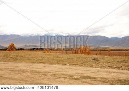 A Row Of Autumn-yellowed Foliage Stands At The Edge Of The Steppe, On The Other Side Are The Snow-ca