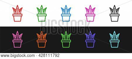 Set Line Plant In Pot Icon Isolated On Black And White Background. Plant Growing In A Pot. Potted Pl
