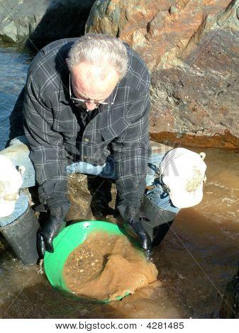 Gold Miner Prospecting