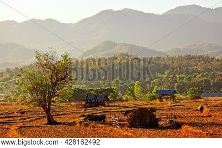 Native Style Farm And Mountain In Northern Thailand