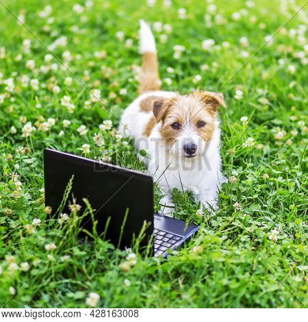 Cute Obedient Dog Puppy Looking In The Grass With A Laptop. Back To School, Pet Training Concept.