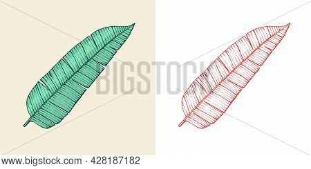 Flowering Plants. Tropical Or Exotic Leaves And Leaf. Palm Plant, Monstera. Vintage Fern. Engraved F