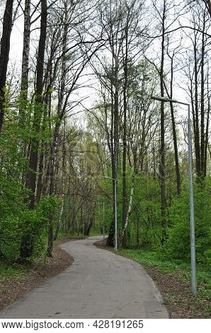 Panoramic View Of The City Park. Asphalt Alley Of The Park Among The Trees. Early Spring.