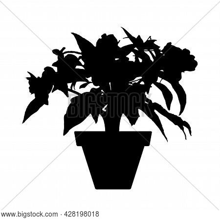 Vector Garden Balsam Plant (impatiens Balsamina) In Pot Silhouette Isolated On White Background