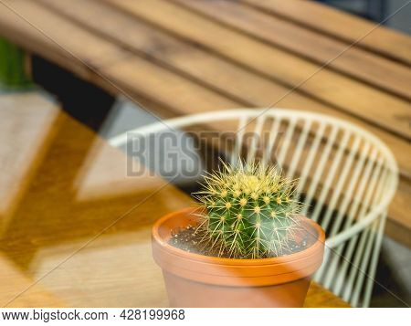 View On Little Cactus In Clay Pot Through Window Of Cafe. Green Leaves Of Houseplants Inside Little