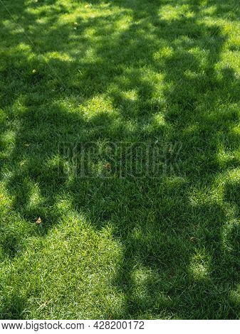 Sunbeams On Fresh Green Grass. Natural Background With Lawn At Spring Sunny Day. Sun Shines On Moss