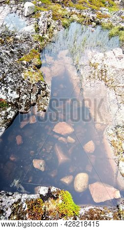 Fragment Of Tundra Swamps Close-up. Translucent Water Surface, Ancient Stones Of Mosses And Lichens.