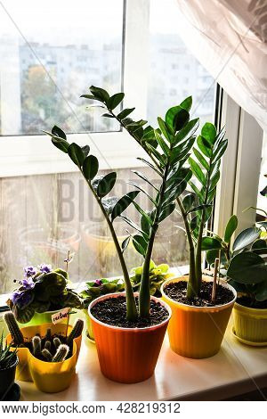 Different Green Potted Plants Near Window At Home. Windowsill. Stay Home. Seedlings, Potted Flowers,