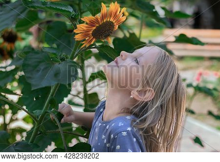 Little Girl, Blonde Raised Her Head And Sniffs A Sunflower, Portrait Of A Child In Profile Against A