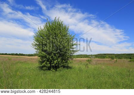 summer landscape with green tree on meadow under nice clouds in blue sky. Take it in Ukraine