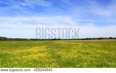 Summer landscape with flower meadow in steppe