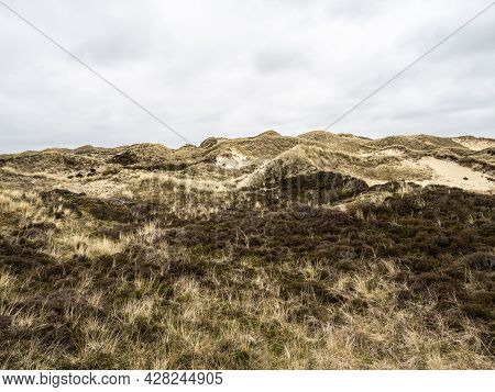 Sand Dune Landscape Overgrown With Grass On The Island Of Amrum, Germany. Siatler Or Setzer Dune In