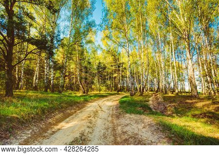 Path Road Way Pathway With Trees On Sunny Day In Summer Forest. Sunbeams Pour Through Trees. Russian