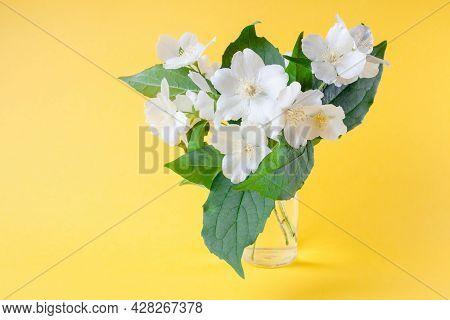 Bunch Of White Jasmine Flowers. Jasmine Bouquet In Glass Vase On Yellow Background. White Flowers Wi