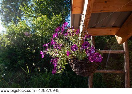 Flower Pot Pink And Purple Bleeding Heart Blossoms Hanging From A Flower Pot Flower Garden Roof Susp