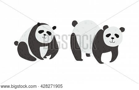 Panda Bear With Black-and-white Coat And Rotund Body Vector Set