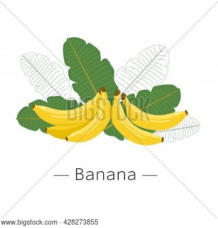 Bananas With Green Leaves Isolated On White Background. Yellow Banana. Vector Illustration Of A Bana