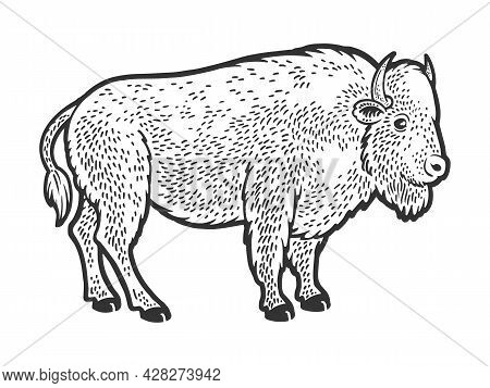 Buffalo Bison Animal Sketch Engraving Vector Illustration. T-shirt Apparel Print Design. Scratch Boa