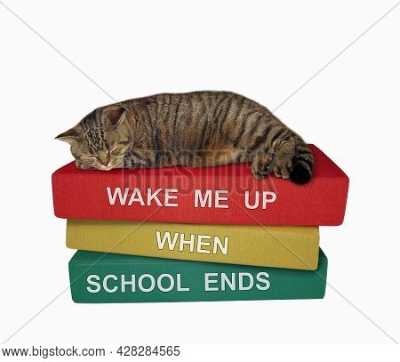 A Beige Cat Is Sleeping A Pile Of Books. Wake Me Up When School Ends. White Background. Isolated.