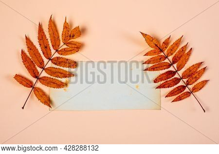 Autumnal Leaves With A Blank Paper Closeup