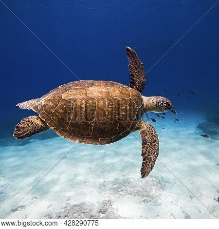 Green Wild Turtle Underwater Ocean Wildlife Animal In Mediterranean Sea