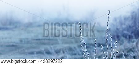 Frost-covered Stalks Of Dry Grass In The Field On A Frosty Cloudy Morning