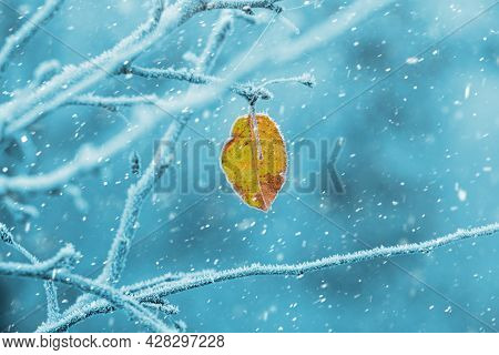 A Lone Dry Leaf Covered With Frost On A Tree. The Branches Of The Tree In Winter Are Covered With Fr