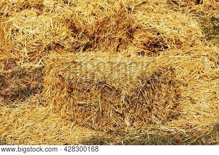 Straw Mowed In The Field After The Wheat Harvest And Packed In Square Bales. Square Bales Of Golden