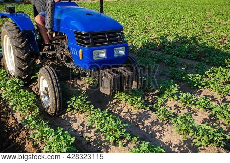 Tractor Is Driving Across Field. Potato Plantation. Young Potatoes Bushes. Agroindustry And Agribusi