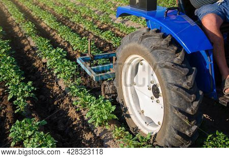 A Farmer On A Tractor Plows The Field. Potato Plantation. Agroindustry And Agribusiness. Field Work