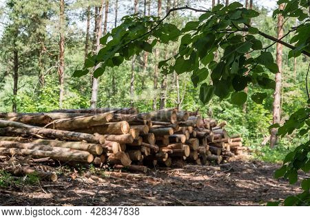 Felling Trees. Trunks Of Felled Trees. Cut Down Trees. Deforestation And Logging. Selected Focus.