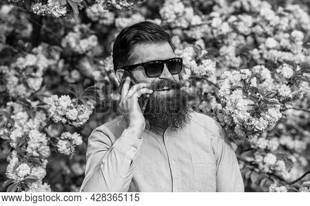Bearded Man In Pink Shirt Talking By Phone. Springtime. Brutal Mature Hipster Speak On Phone In Cher