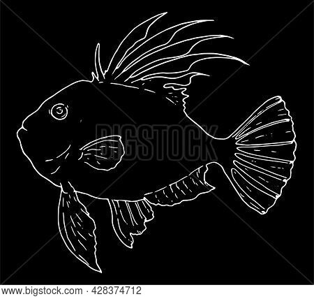 An Isolated Vector Element Of John Dory. Isolated White Outline On A Black Background With A Side Vi