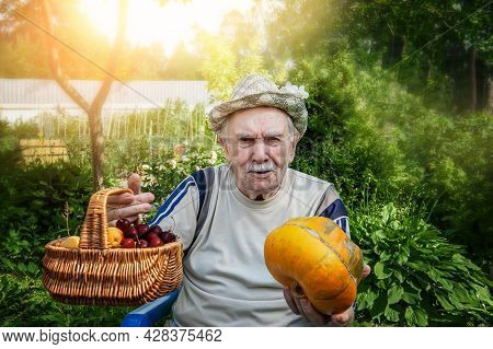 Cheerful Old Farmer Of 87 Years Old Offers A Basket With Cherries And A Pumpkin. The Old Man Gathere