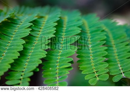 Repetitive Rows Of Crisp Green Leaves Forming Patterns In Nature
