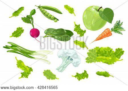 Cartoon Set Of Summer Farm Harvest, Organic Veggies. Vector Apple, Carrot, Bean, Radish, Lettuce, Sp