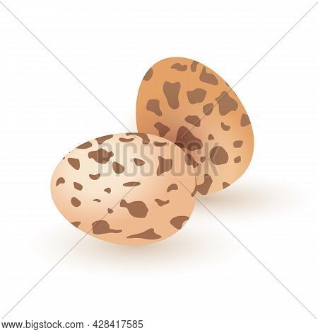Raw Quail Eggs, Morning Breakfast Delicacy, Tasty Healthy Product, Full Of Protein. Vector Whole Qua