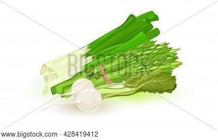 Whole Green Asparagus Spears Vegetable Tided With Thread, Fresh Green Veggie. Farm Menu, Healthy Gre