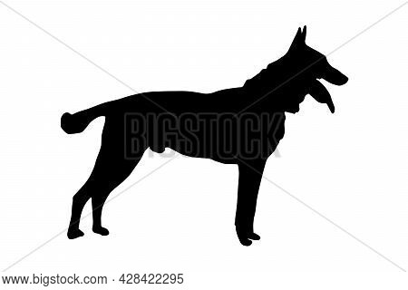 Black Full Height Silhouette Of A Dog With Tongue And Tail Sticking Out On White.  Adult Male Belgia