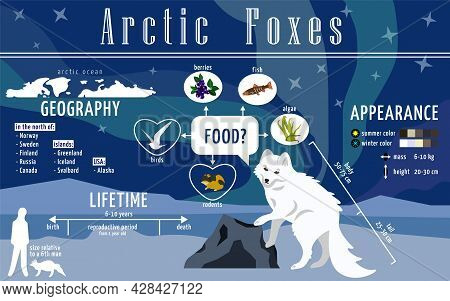 Ready To Use Educational Poster About Arctic Foxes. Infographics For Print In A Children's Encyclope