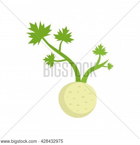 Fresh Root Celery Icon. Flat Illustration Of Fresh Root Celery Vector Icon Isolated On White Backgro